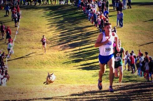 Arizona cross country, where the coyote comes out to pace you.